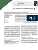 Understanding Fertilization Through Intracytoplasmic Sperm Injection (ICSI)