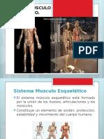 Sistema Musculo Esqueltico