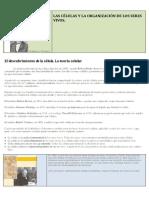 1-la-cc3a9lula.pdf