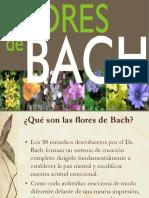 Flores Bach I