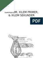 KAMBIUM, XILEM PRIMER, & XILEM SEKUNDER.pptx
