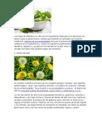 Raices Medicinales y Comestibles