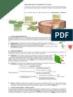 4. Guia Tejidos Vegetales