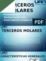 Terceros Molares gabriela markus.pptx