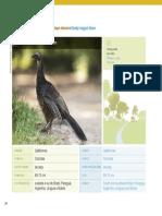 27_pdfsam_guia_de_aves_mataatlantica_wwfbrasil.pdf