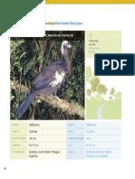 29_pdfsam_guia_de_aves_mataatlantica_wwfbrasil.pdf