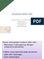 Anatomi Jalan Lhir