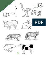 Animales y Su Alimentacion