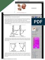 Biología Humana_ Articulaciones_ Tipos de Movimiento