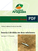 17 Ordens Insecta (1)