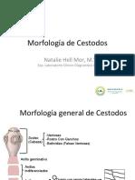 Morfologia-Cestodos (1)