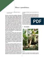 Musa × paradisiaca