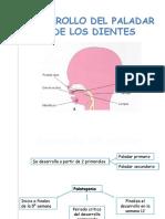 Expo Embrio - Paladar y Dientes