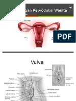 1 Anatomi Organ Panggul.pptx