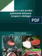 lpfitoexpl9.pptx