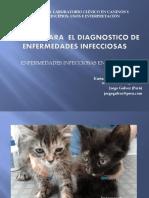Enfermedades Infeccciones 3-3 Felinos