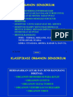 (3a) Org. Sensoris A