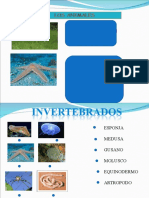 presentacion_invertebrados