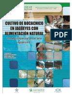 Cultivo Del Bocachico en Jagueyes