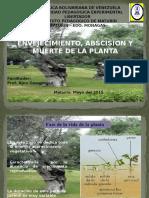 Envejecimiento, absición y muerte plantas