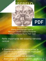 presentacion cerebelo