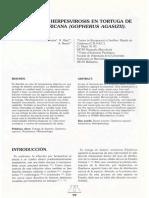 Herpesvirosis en Tortuga Dedesierto Americana (Gopherus Agasizii)