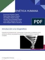 Citogenetica Humana