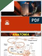 Lesiones de nervios periféricos I y II. Andrés..pptx