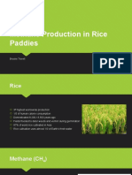 methane production in rice paddies