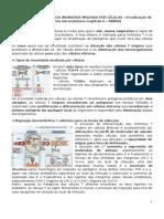 Resumo_Capítulo 6.doc