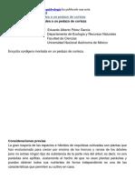 Asociacion Mexicana de Orquideologia