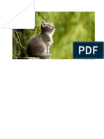 Pisicuță La Vânătoare
