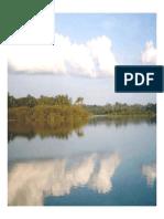 La siringa el sabalo y el paisano.pdf