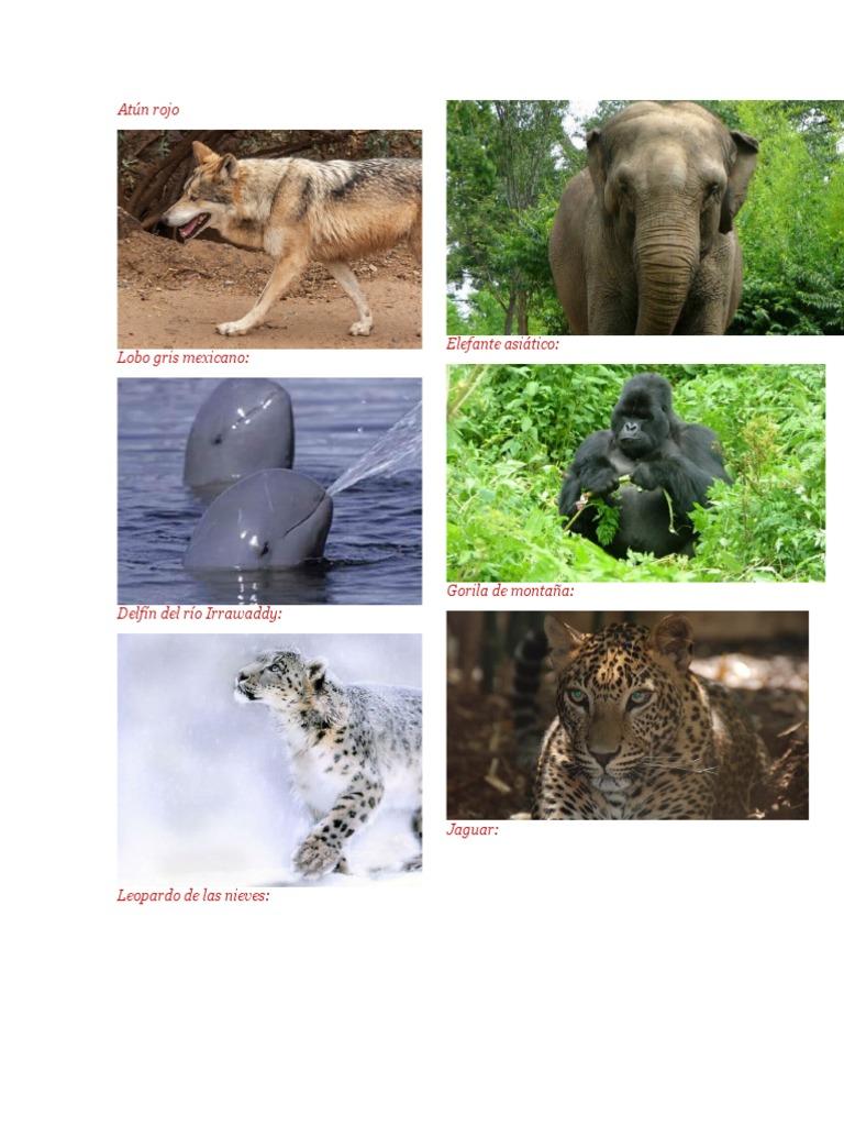 animales que estan en peligro de extincion.docx