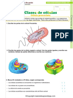 03 Clases de Celulas - Procariotas-eucariotas