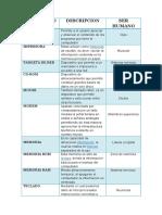 partesdelacomputadorarelacionadoconelserhumano-100831193624-phpapp01