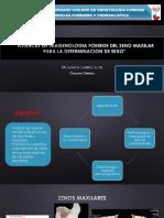 pdf AVANCES EN IMAGENOLOGIA FORENSE DEL SENO MAXILAR.pdf