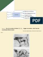 biological psychology_ppt12