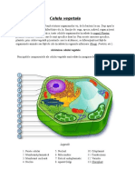 Celula vegetala 2