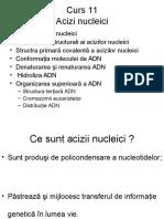Acizi nucleici complet, AA.ppt