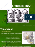 183245355-Trigemen