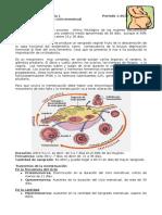 4. Fisiologia Del Ciclo Menstrual