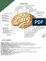 Areas del cerebro Origen Aparente de pares craneales y Lx.doc