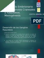 Desarrollo Embrionario de Los Nervios Craneales y Raquídeos