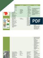 Tabla de Organelos(Histoembriología)