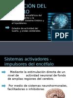 Activacion Del Cerebro