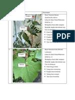 Tugas struktur tumbuhan