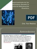 Clase 04 - Comportamiento de Los Cromosomas Durante La Transmisión de La Información Genética