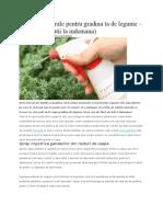 Pesticide Naturale Pentru Gradina Ta de Legume 1