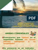 AMIBAS COMENSALES AFYCVMJDMM